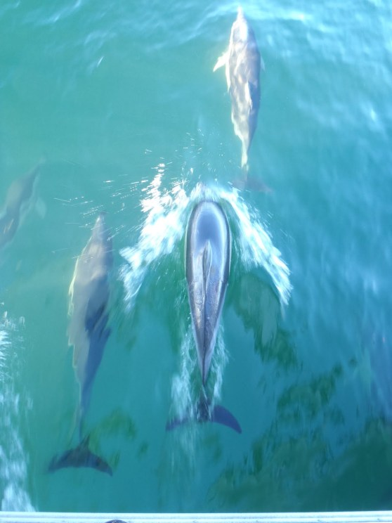 Photos from whale/dolphin cruise