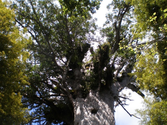 Tane Mahuta (Lord of the Forest)
