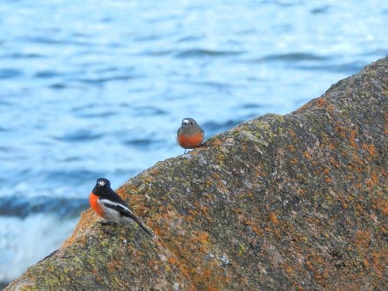 Freycinet National Park & Swansea