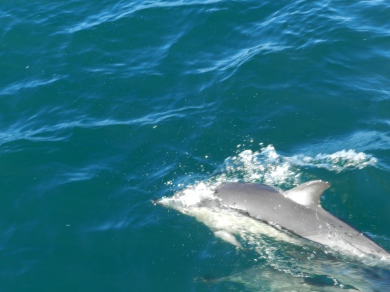 Whale & Dolphin Watching in Auckland