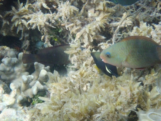 Palolo Marine Reserve, Apia, 'Upolu, Samoa