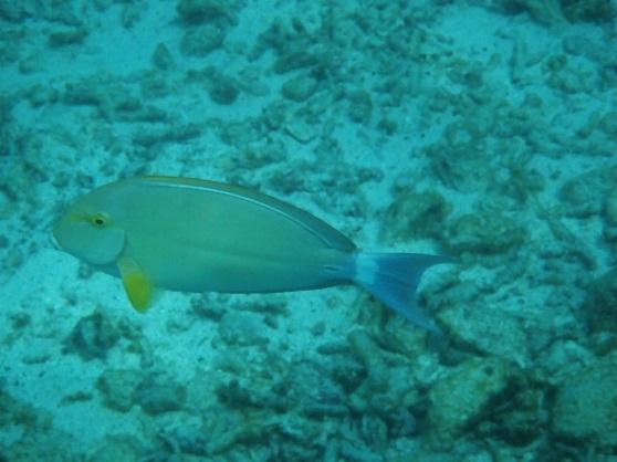 Samoa (underwater)