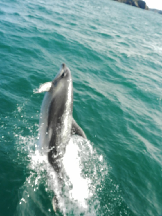 Whale and Dolphin Watching in the Hauraki Gulf