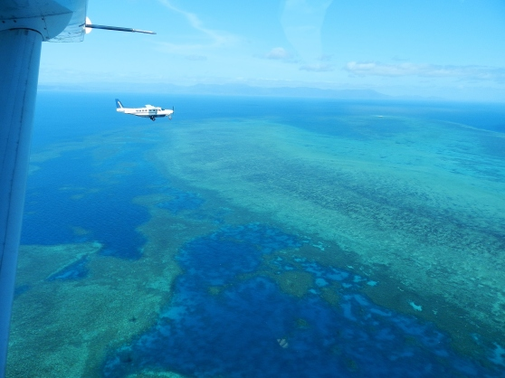 Flying in Formation over the Reef