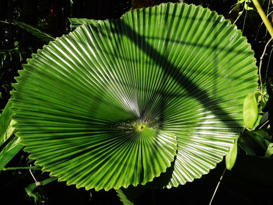 Leaf, Botanical Gardens