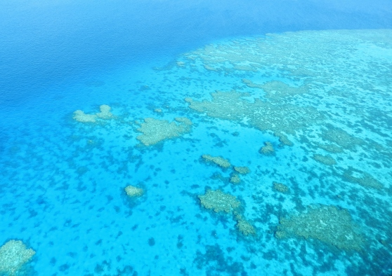 Reef from Above