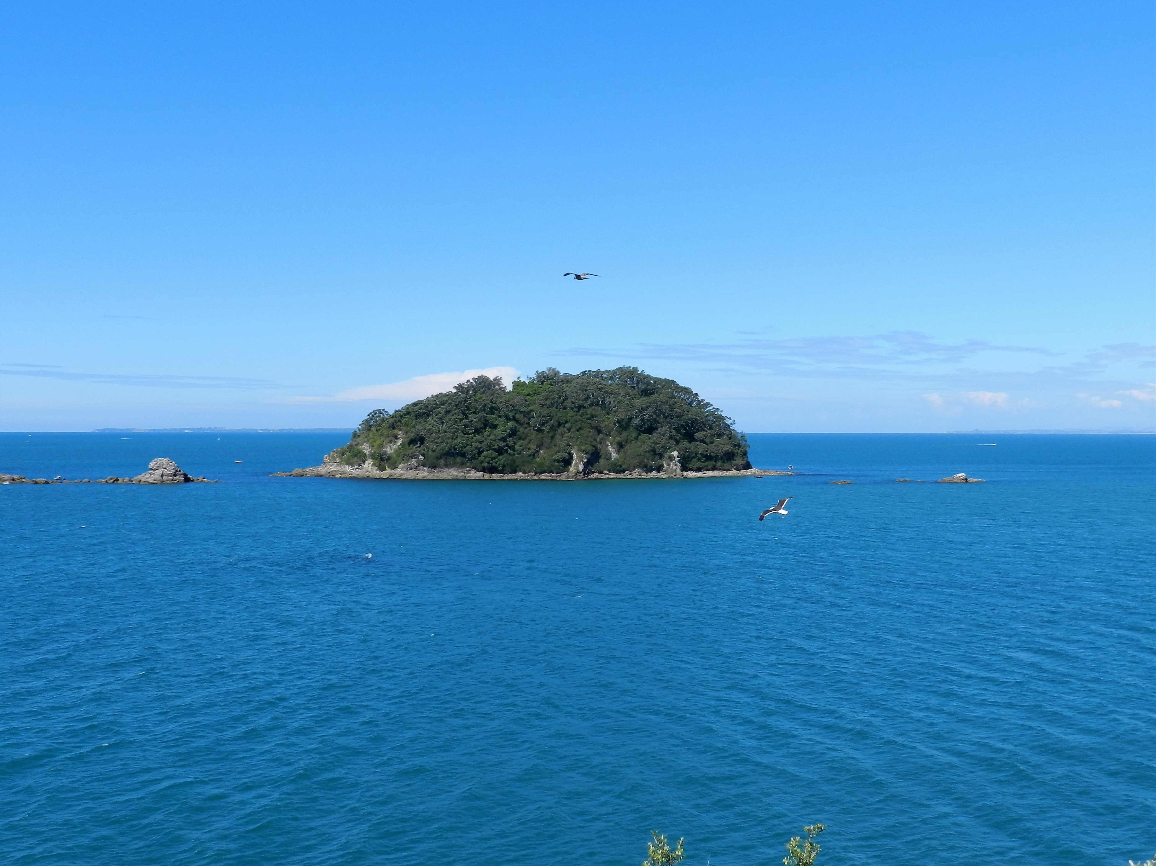 Motuotau Island, Tauranga, 2013 Jan.March