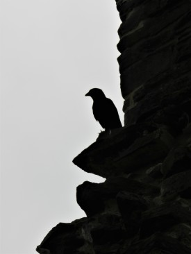 Neath Abbey Crow.1