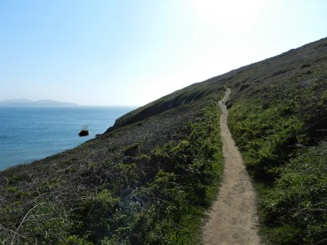Trail to St. David's Head
