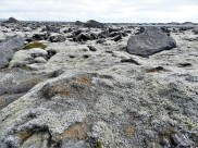Moss and lichen covered lava field