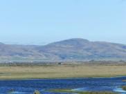 Flói Bird Reserve