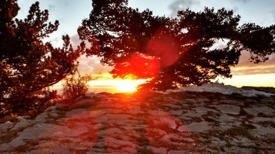 Sandia Sunset through Trees