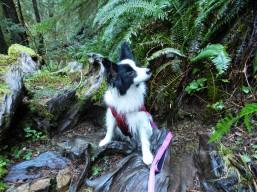Corbin on the Trail